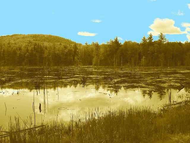 Écosystème avec quenouilles sur la 9 south entre Ausable & Lewis /  Vermont USA / États-Unis.  25 juillet 2009-  Sepia avec ciel bleu photofiltré