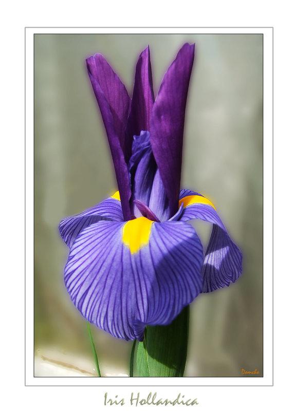 Une fleur par jour.... 6277667.67a965b9.800