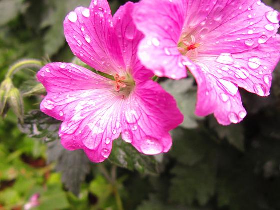 Odd flower in the driveway
