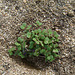 Small Plant (4985)