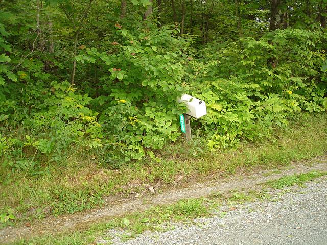 Half moon state park. Sur la 4 près de la 30 nord. Vermont, USA /  États-Unis -   26 juillet  2009 -  Courrier dans la nature /  Mail and mother nature