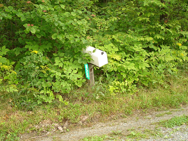 Half moon state park. Sur la 4 près de la 30 nord. Vermont, USA /  États-Unis -   26 juillet  2009 -  Courrier dans la nature /  Mail and nature