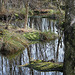 20070216 0010DSCw [D-MI] Moor, Großes Torfmoor, Hille