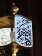 Lantern (pc258898)