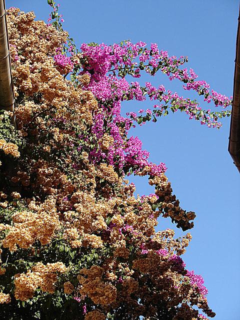 20061106 0921aw St. Paul, Blumen