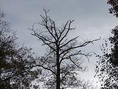 Mort d'un arbre...