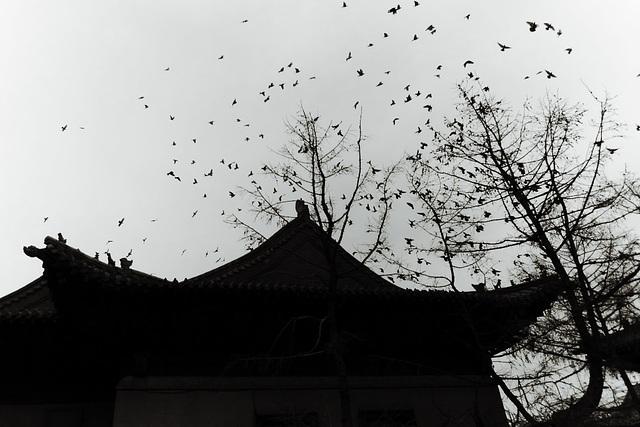 Vtáčiska