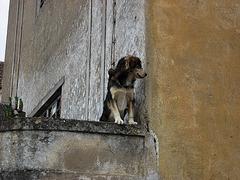 A-dos-Ruivos, insolvent factory, watchdog (7)