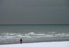 promenade hivernale d' un rouge gorge.