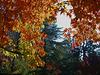 Autumn (pb300938)