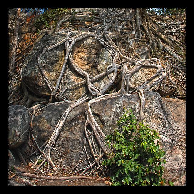 skeleton roots