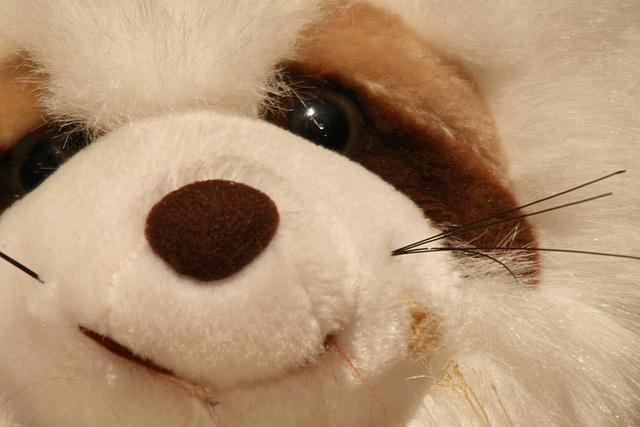 20091006 0871Tw [D~LIP] Panda-Bär, Bad Salzuflen