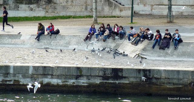 Lunchtime for kids, gavines et pigeons