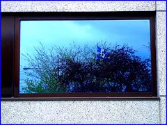 Fleurdelysé hospitalisé  / Hospitalized fleur-de-lis flag -  Dans ma ville / Hometown .  Mai 2008.