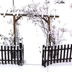 ĝardenpordo vintre - Gartentor im Winter