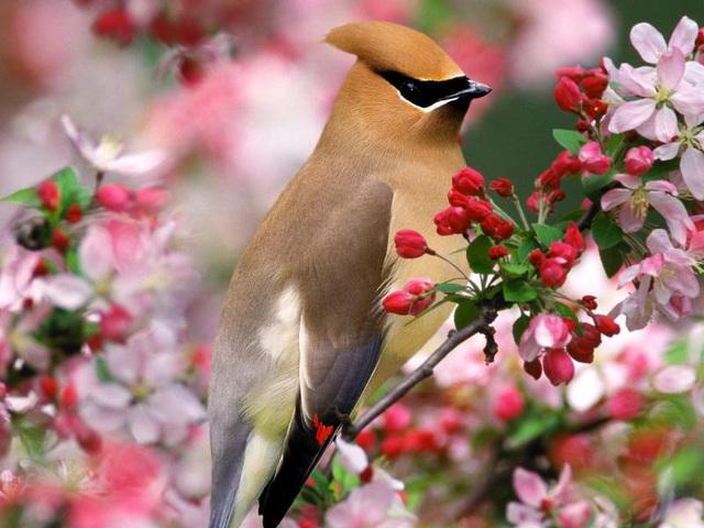 Bela birdo en floro.