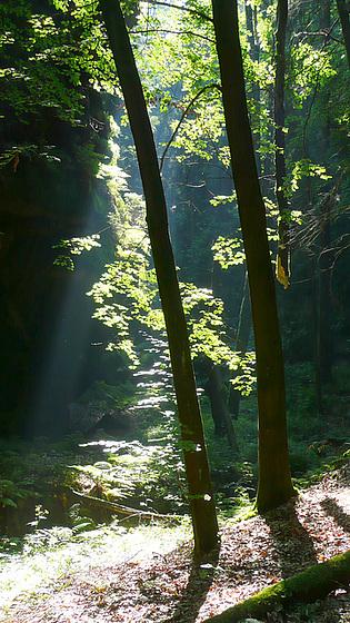 Licht im Wald