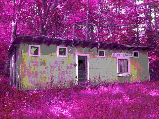 Oak lodge  /  Route 125. Vermont / USA -  À l'intersection de  Hollow drive et oak lodge drive.  25 juilet 2009. -  Inversion RVB postérisée avec couleurs ravivées.