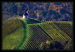 vine country Styria