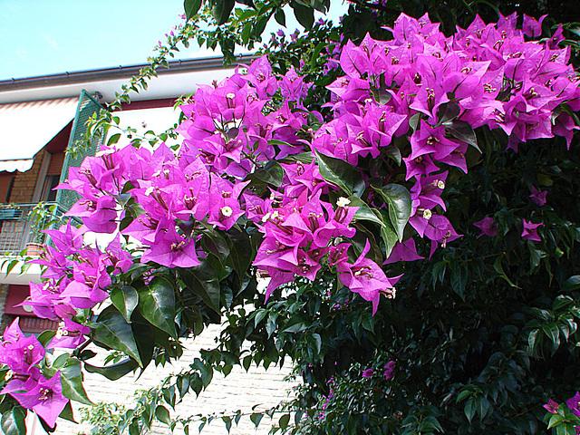 20050919 151DSCw Massa [Toscana]