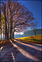 magic autumn light