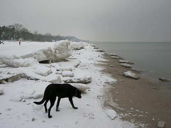 Schollen am Strand