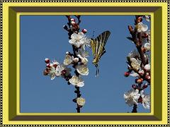 Annonciation du printemps