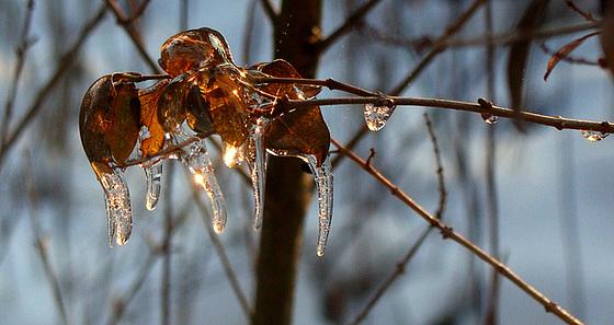 melting honey