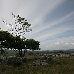 Tree on limestone