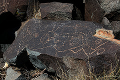 Three Rivers Petroglyphs (6115)