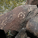 Three Rivers Petroglyphs (6116)