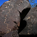 Three Rivers Petroglyphs (6129)