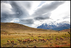 it's time for some guanacos