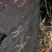 Three Rivers Petroglyphs (6147)
