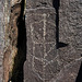 Three Rivers Petroglyphs (6149)