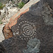 Three Rivers Petroglyphs (6166)