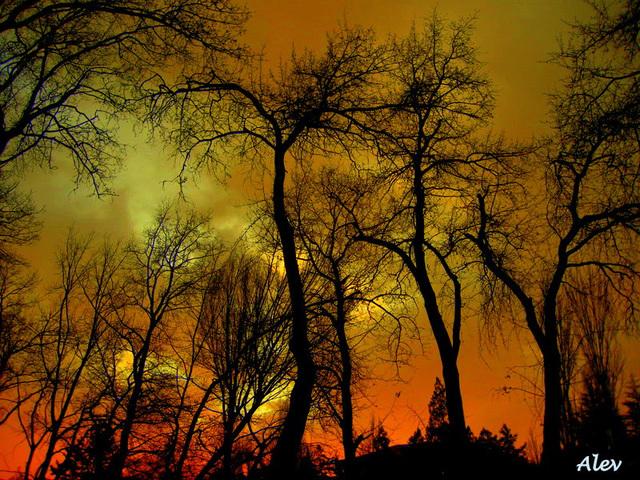 Ağaç... Dendro...Tree