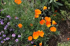 L.A. Garden Tour (6303)
