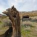 Barker Ranch (4934)