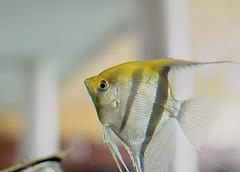 Fischi Fisch