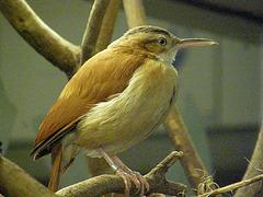 Jean Ferrat chante : Restera-t-il un chant d'oiseau ?