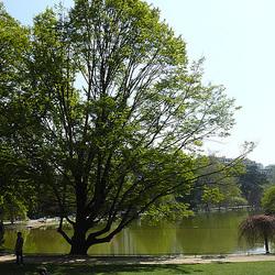 L'étang du Parc Montsouris