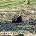 Tierpark Schwarze Berge  023