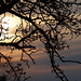 Sonnenuntergang 2010 03 10