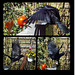 my ravencrow