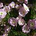 In The CVWD Garden (5607)
