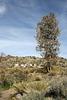 Barker Ranch (4950)