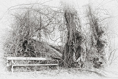 bench in the white wild