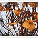 Herbstfarben im Winter