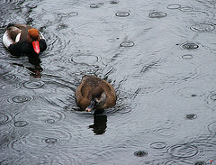 Ducks and drops